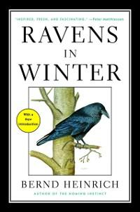 Cover Ravens in Winter