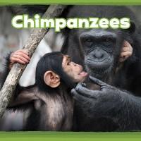 Cover Chimpanzees