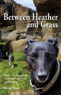 Cover Between Heather and Grass