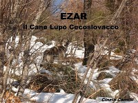 Cover EZAR il Cane Lupo Cecoslovacco