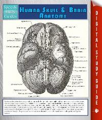 Cover Human Skull And Brain Anatomy (Speedy Study Guide)