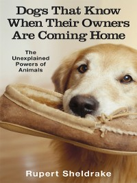 Cover Dogs That Know When Their Owners Are Coming Home