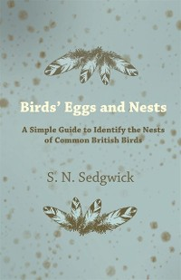 Cover Birds' Eggs and Nests - A Simple Guide to Identify the Nests of Common British Birds
