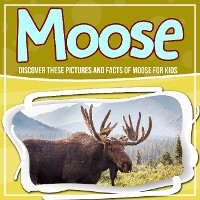 Cover Moose: Discover These Pictures And Facts Of Moose For Kids