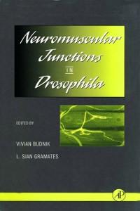 Cover Neuromuscular Junctions in Drosophila