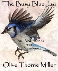Cover The Busy Blue Jay