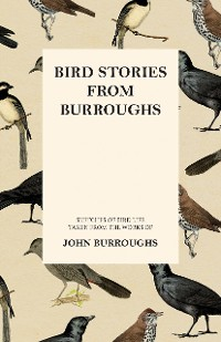 Cover Bird Stories from Burroughs - Sketches of Bird Life Taken from the Works of John Burroughs
