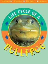 Cover Life Cycle of A Bullfrog