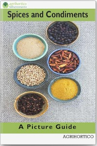 Cover Spices and Condiments
