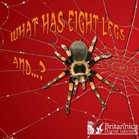 Cover What Has Eight Legs and... ?