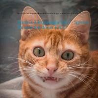 Cover Matthi's Alltagssorgen Teil 2 - Sprichst Du auch mit deiner Katze?