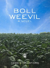 Cover Boll Weevil