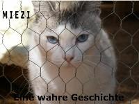 Cover Miezi – Eine wahre Katzengeschichte
