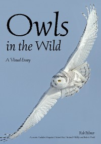 Cover Owls In The Wild
