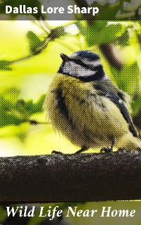 Cover Wild Life Near Home