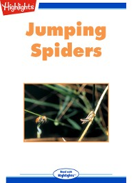Cover Jumping Spiders