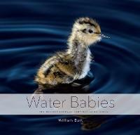 Cover Water Babies: The Hidden Lives of Baby Wetland Birds