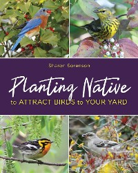 Cover Planting Native to Attract Birds to Your Yard