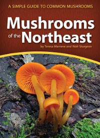 Cover Mushrooms of the Northeast
