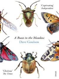 Cover A Buzz in the Meadow