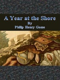 Cover A Year at the Shore