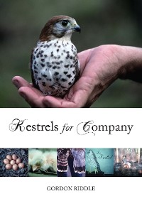 Cover Kestrels for Company