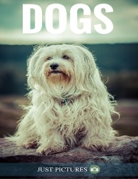 Cover Dogs