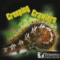 Cover Creeping Crawlers