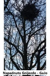 Cover Napadnuto gnijezdo