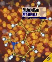 Cover Metabolism at a Glance