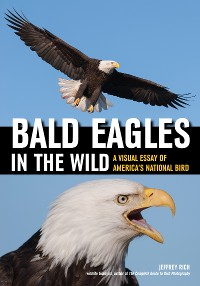 Cover Bald Eagles In The Wild