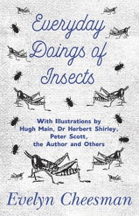 Cover Everyday Doings of Insects - With Illustrations by Hugh Main, Dr Herbert Shirley, Peter Scott, the Author and Others